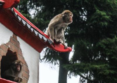 Foto van een aap gemaakt tijdens de jubileumdag
